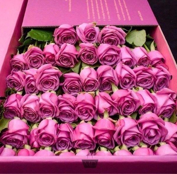 Pour vous ces superbes roses !